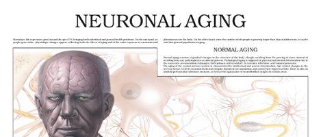 Neuronal Aging