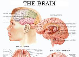 The Brain II