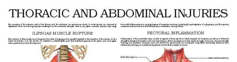 Thoracic and abdominal injuries