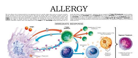 Allergy (II)