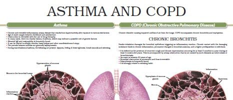Asthma & COPD (Chronic Obstructive Pulmonary Disease) (II)