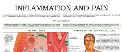 Inflammation and pain