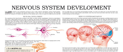 Nervous system development
