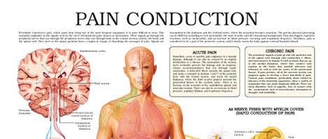 Pain conduction