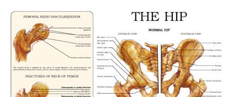 The hip