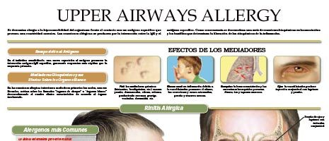 Upper airways allergy